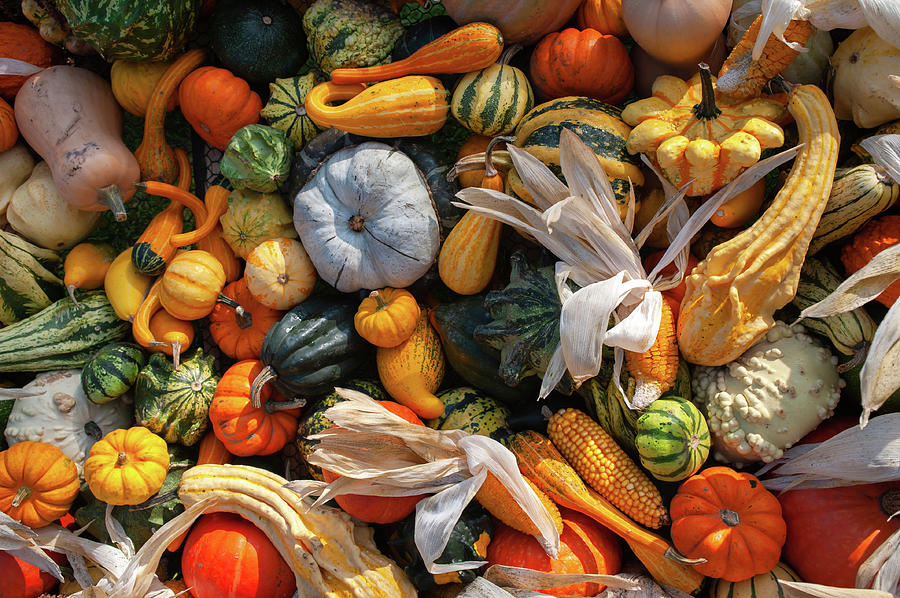Display Of Colorful Ornamental Gourds And Pumpkins 5 by Jenny Rainbow