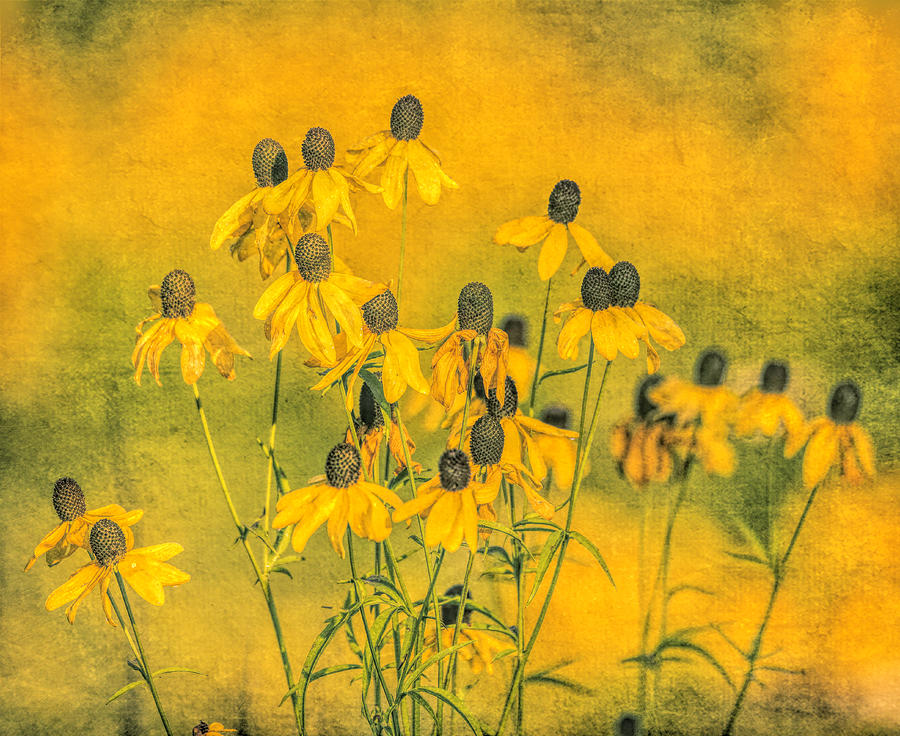 Distressed Yellow Wildflowers by Dan Sproul