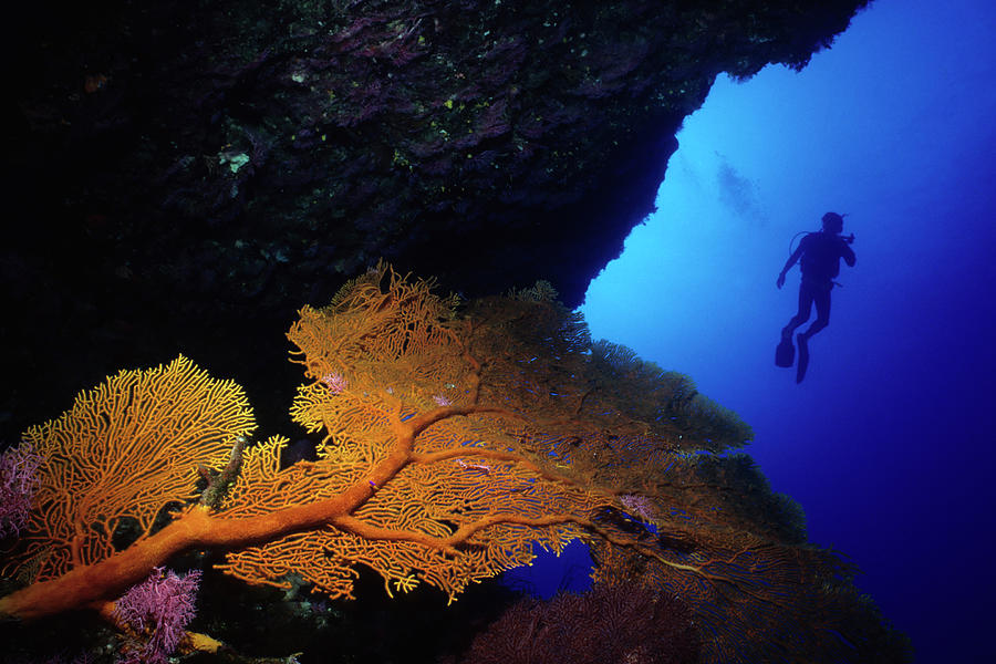 Diver And Orange Sea Fan Photograph by Tammy616