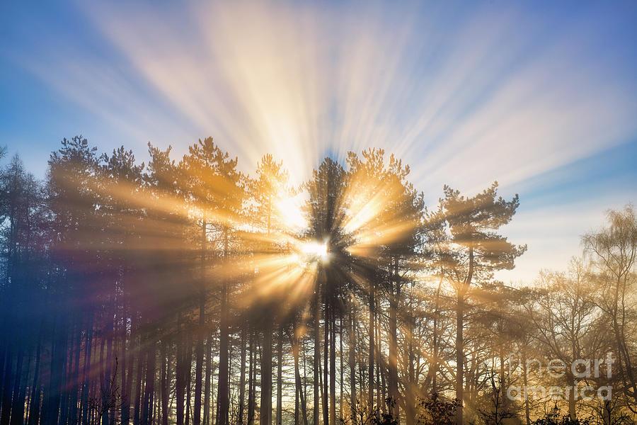 Divine Light by Tim Gainey