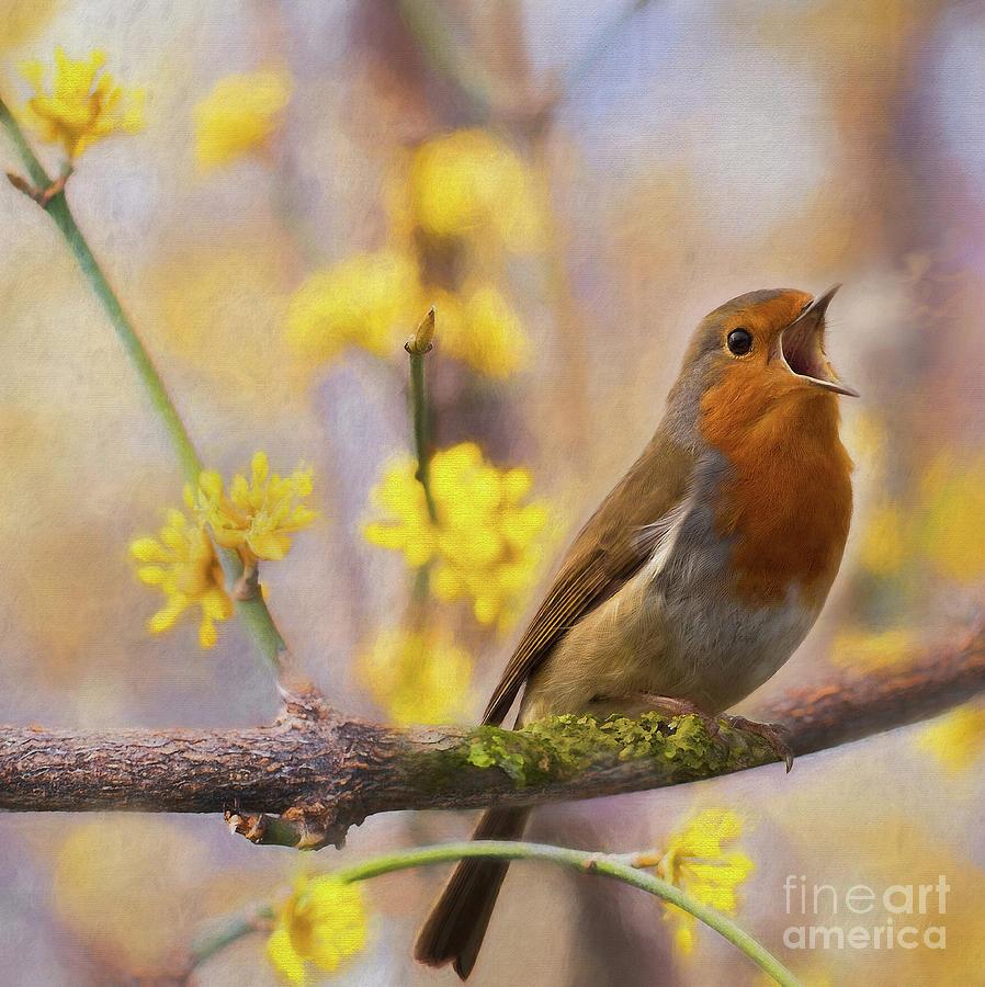 Robin Mixed Media - Divine Messenger by Helen White