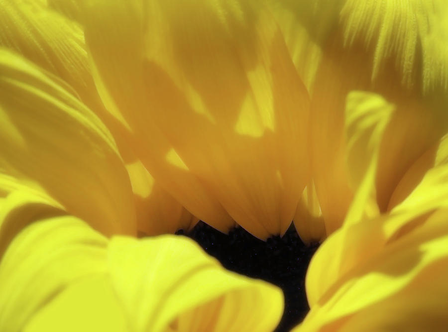 Diving Into A Sunflower by Johanna Hurmerinta