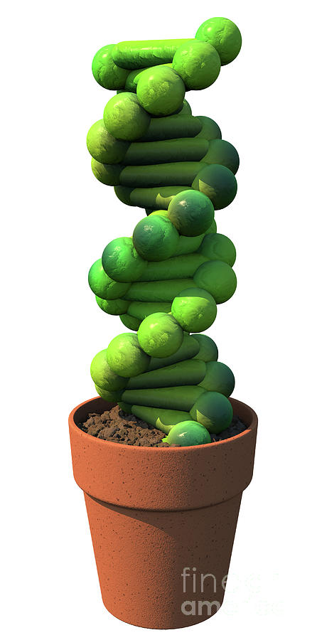 DNA Cactus by Russell Kightley