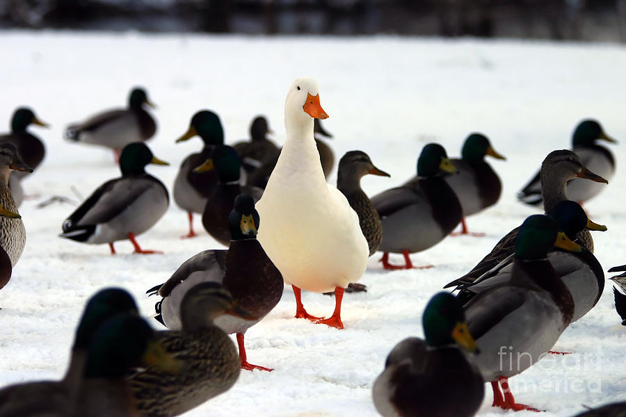 Persevere Photograph - Do You Stand Out From The Crowd  A by Brad Thompson