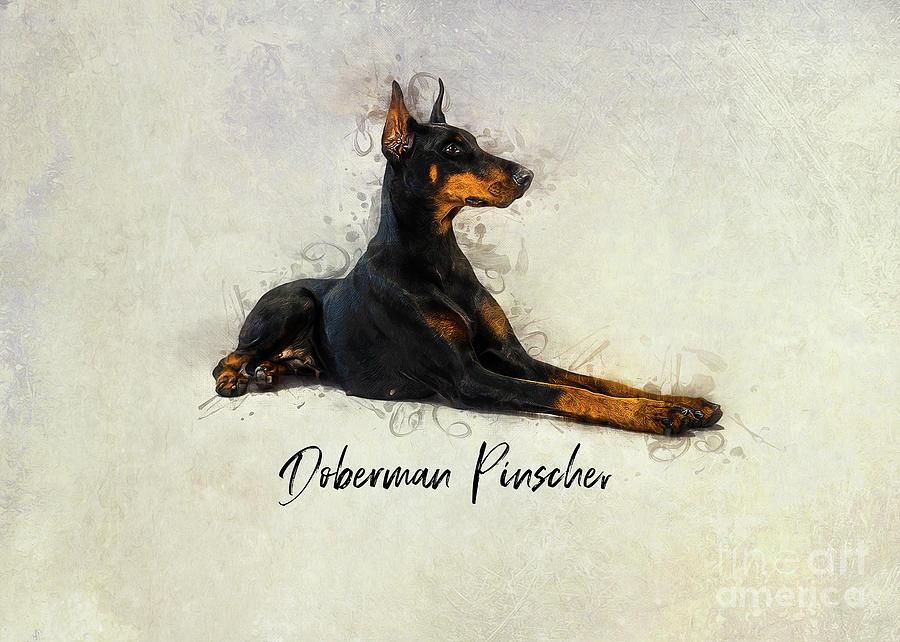 Doberman Pinscher by Ian Mitchell