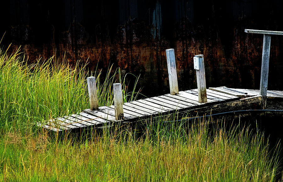 Dock And Grass by Tom Singleton