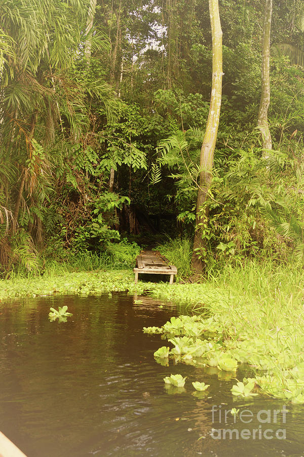 Docking Into The Jungle Photograph