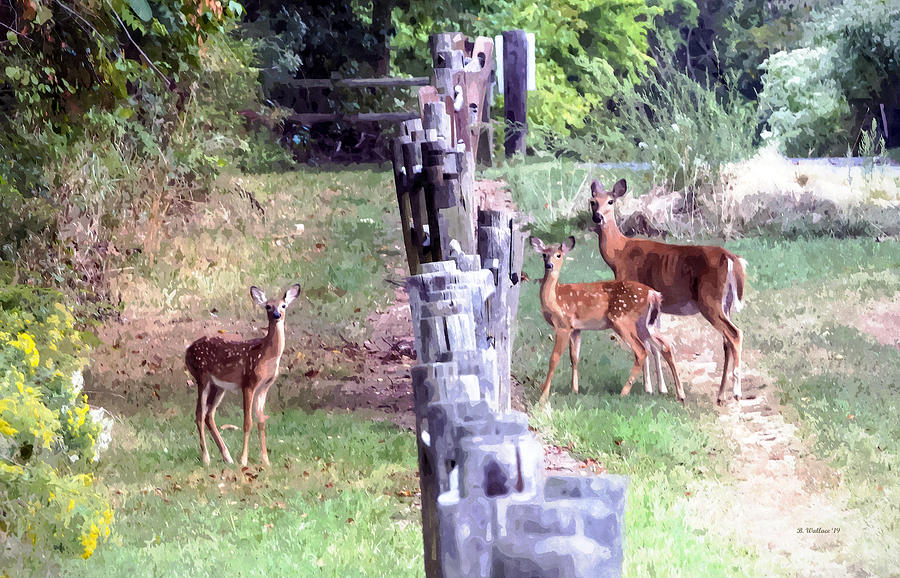 2d Photograph - Doe And Fawns Watercolor Fx by Brian Wallace