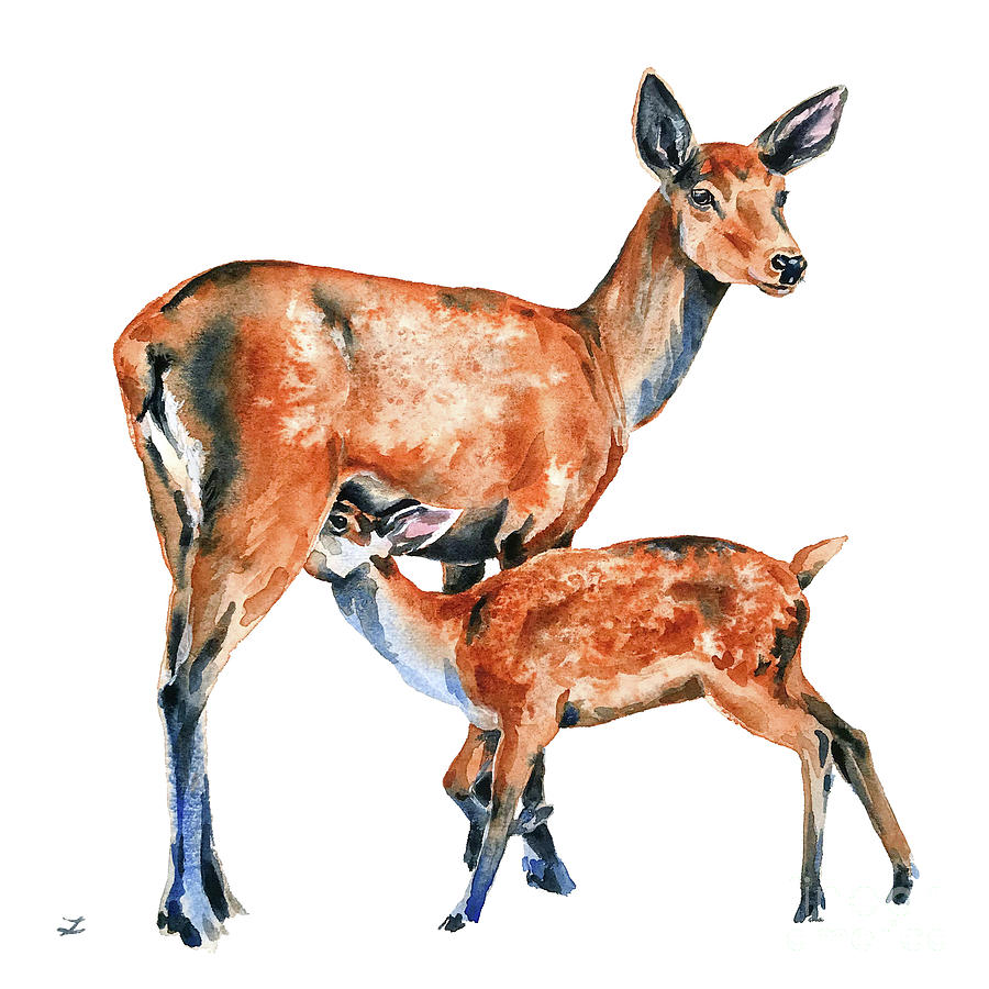 Doe With Feeding Fawn by Zaira Dzhaubaeva
