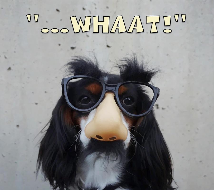 Dog Gone Funny Digital Art