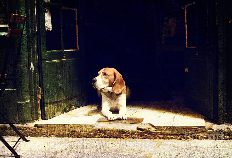 Country Photograph - Dog Guarding The Entrance To The House by Okcamera