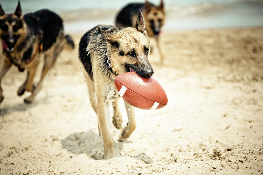 Dog Holding Ball In Mouth Photograph by R. Brandon Harris
