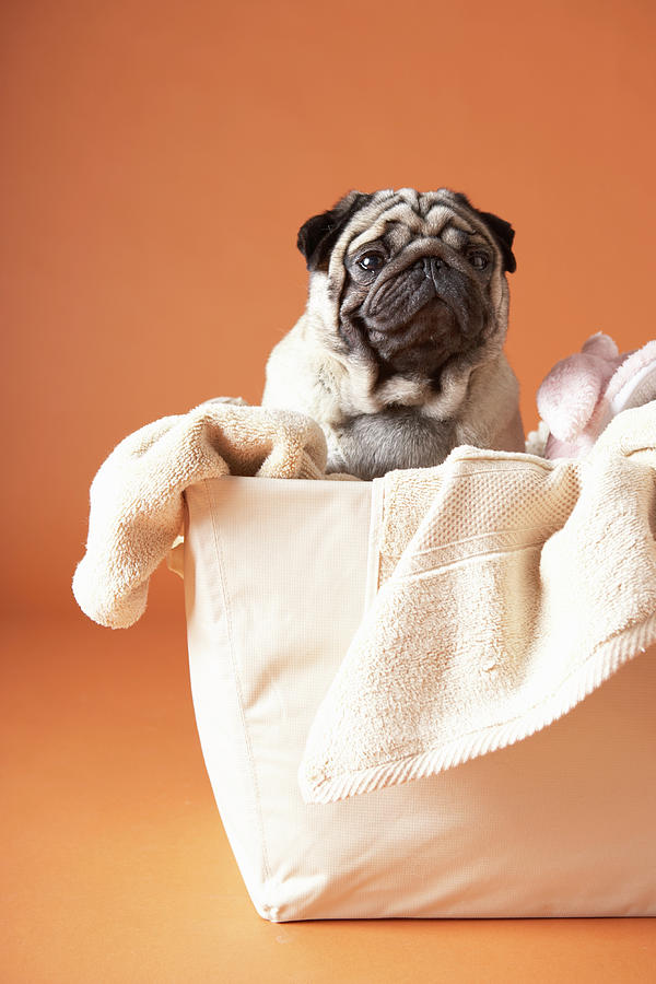 Dog In Basket Photograph by Chris Amaral