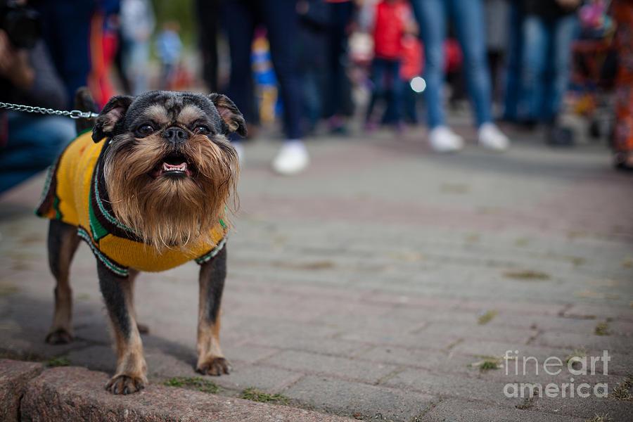 Pets Photograph - Dog In The Jacket by Artem Kotelnikov