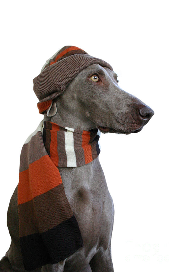Pets Photograph - Dog In Winter Look 2 by Lily Rosen - Zohar