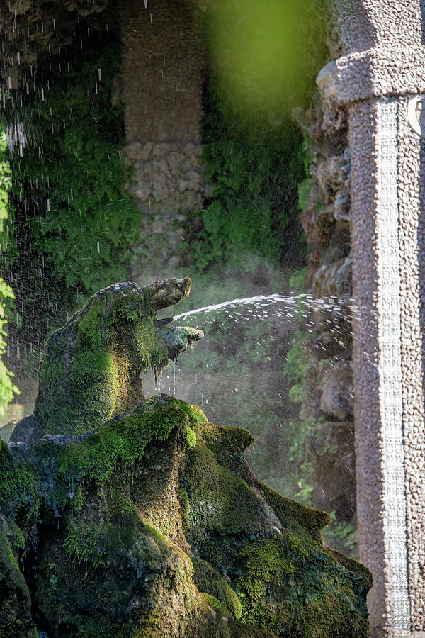 Fountains Photograph - Dog by Joseph Yarbrough
