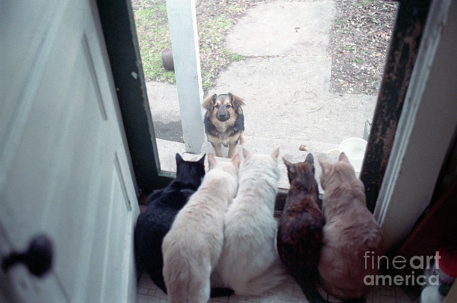 Dog Looking Through Cat-lined Window Photograph by Bettmann