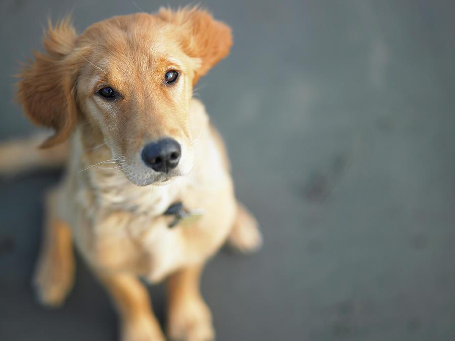 Dog Looking Up, Close-up Photograph by Ryan Mcvay