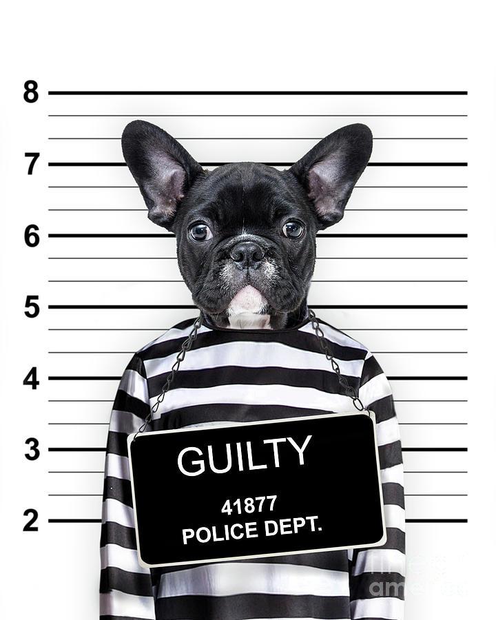 Dog Mugshot Photograph