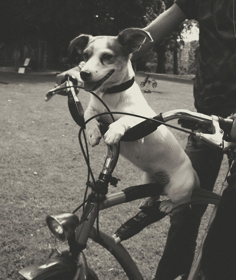 Dog On A Bicycle Photograph by Ineke Kamps