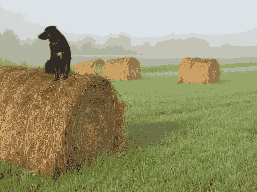 Dog on Hay Bale by Kent Lorentzen