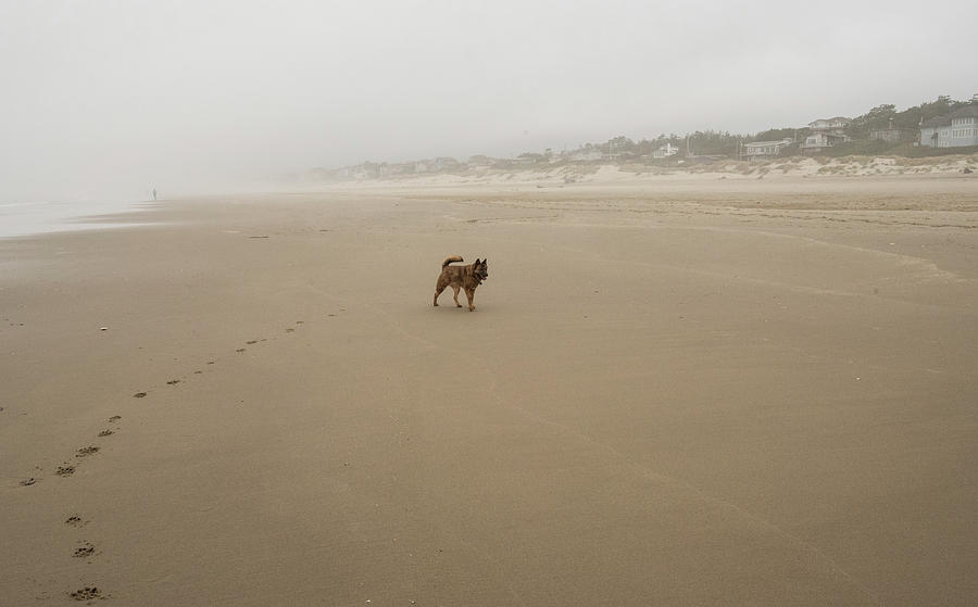 Dog on Lonely Heceta Beach by Tom Cochran