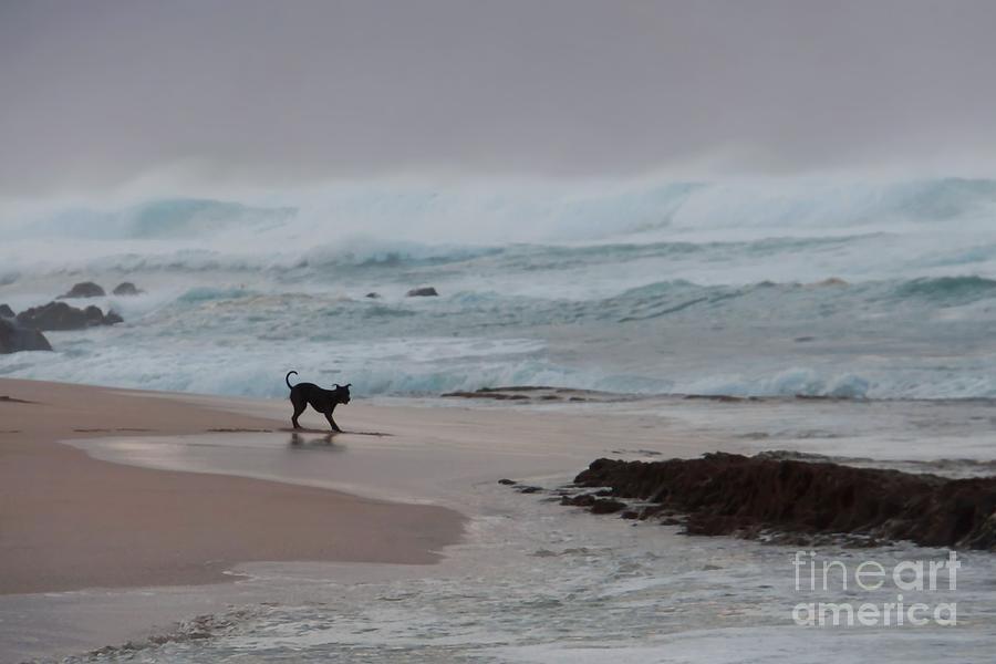 Dog on the Beach by Patricia Strand