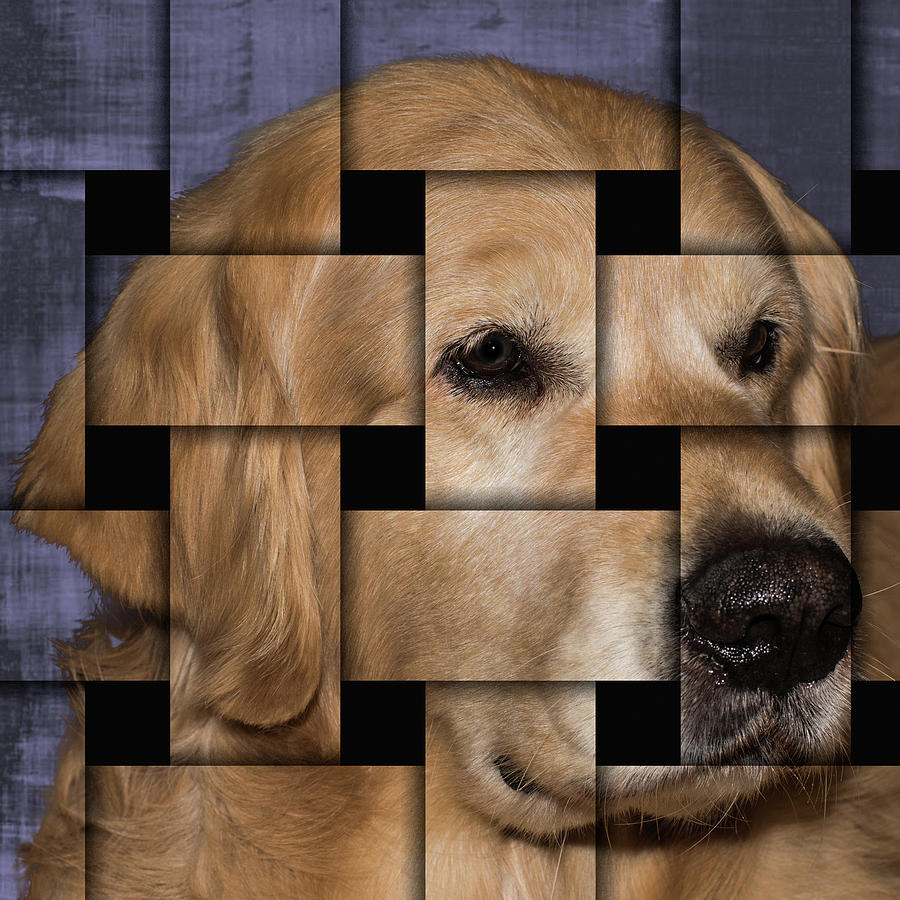 Dog Puzzle by Jennifer Grossnickle