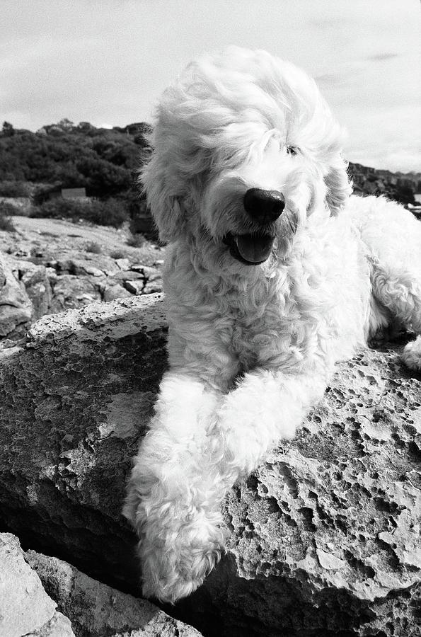 Dog Sitting On Rocks, Portrait Photograph by Henry Horenstein