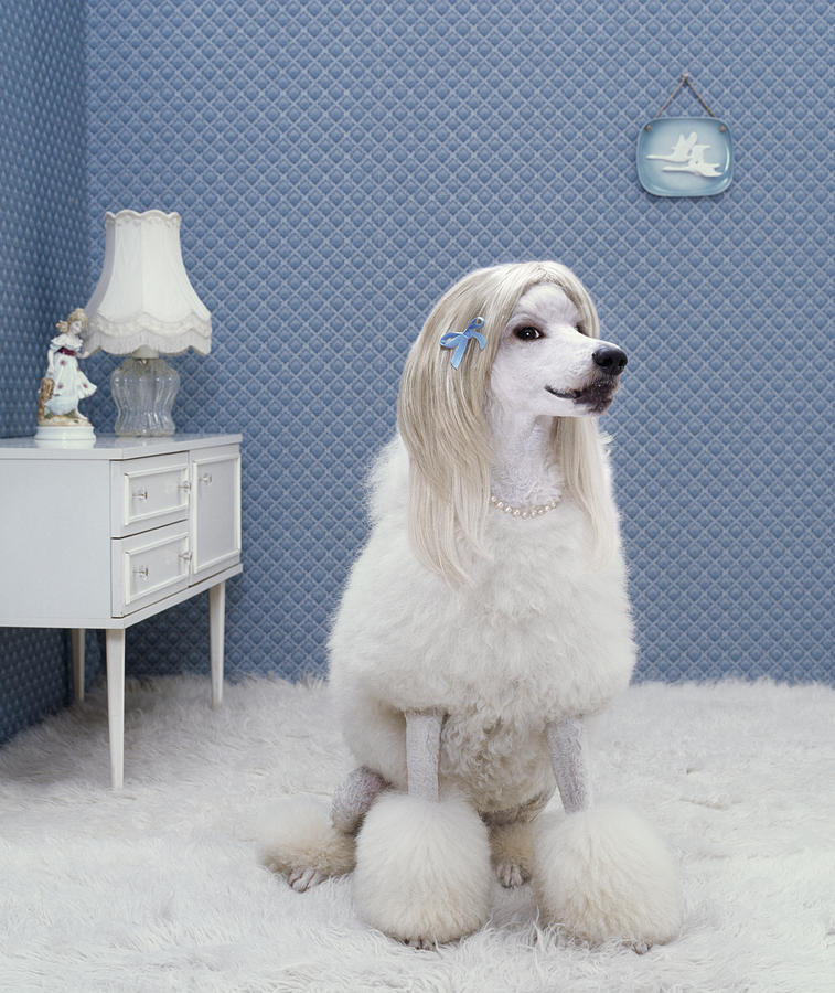 Dog Sitting On Rug, Looking Away Photograph by Rainer Elstermann