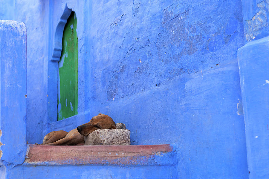 Dog Sleeping By A Blue House With Green Photograph by Marji Lang