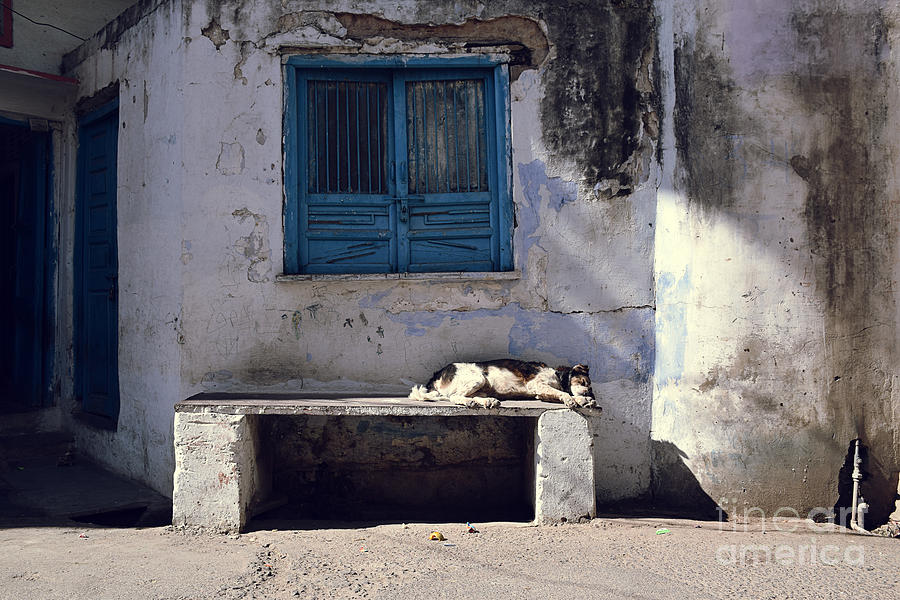 Dog Sleeping Photograph - Dog Sleeps On A Bench Outdoor by Sergio Capuzzimati