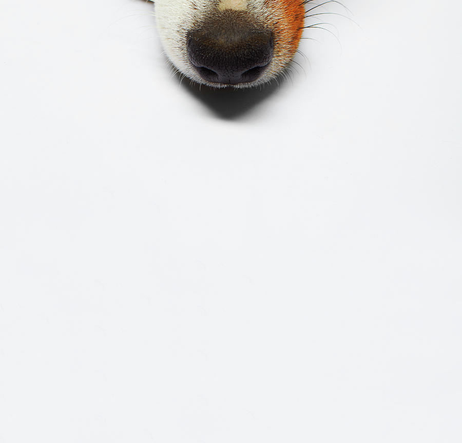 Dog Photograph by Sohl