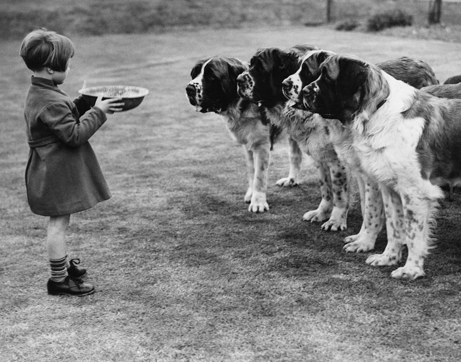Dogs Dinner Photograph by Hulton Collection