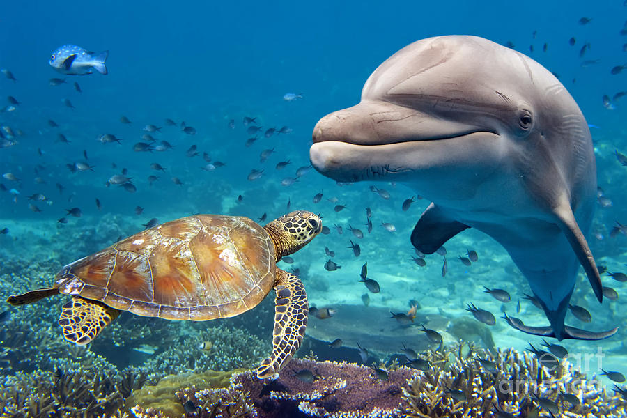 Dolphin Photograph - Dolphin And Turtle Underwater On Reef by Andrea Izzotti