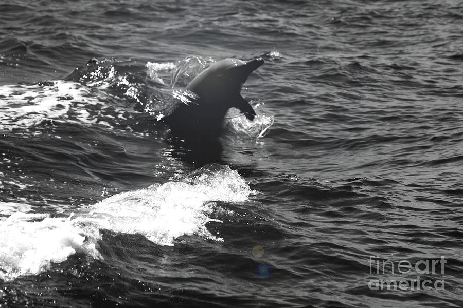 Dolphin Dance Photograph