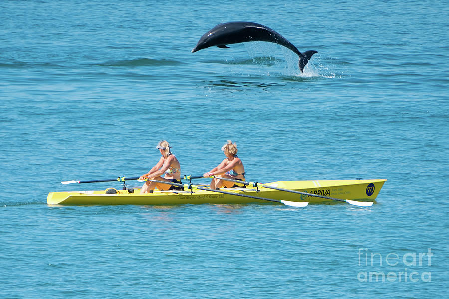 Dolphin Photograph - Dolphin Leaping Over Two Rowers by Keith Morris