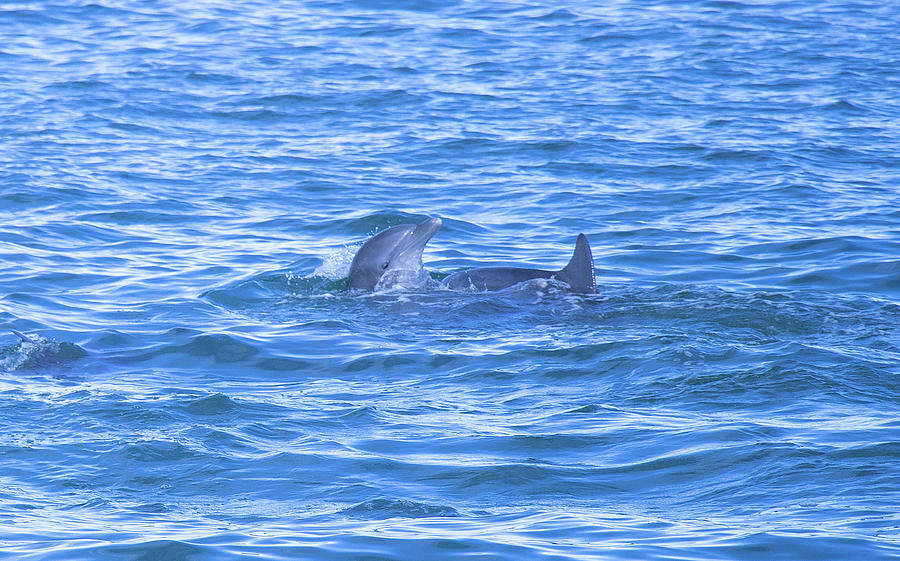 Dolphin Play by Linda Ritlinger