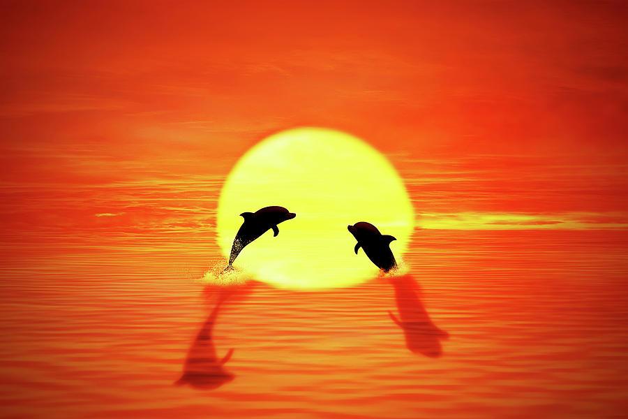Dolphin Sunset Digital Art