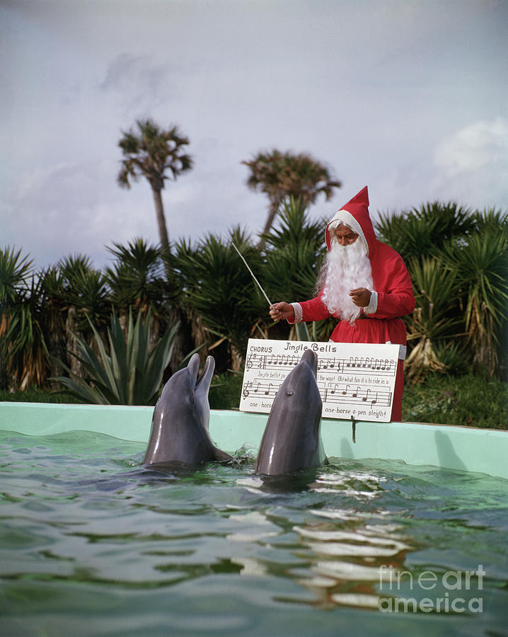 Dolphins Singing For Santa Claus Photograph by Bettmann