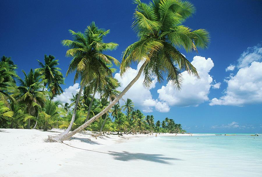 Dominican Republic, Saona Island, Palm Photograph by Stefano Stefani