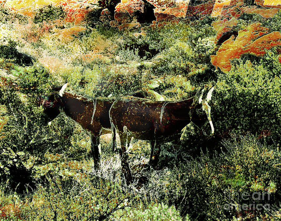 Donkeys Bathed In Sunlight Mixed Media