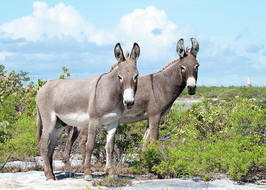 Donkeys by Ramunas Bruzas