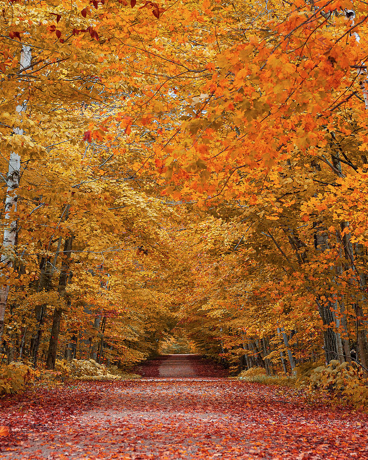 Door County Fall Foliage by Adam Romanowicz