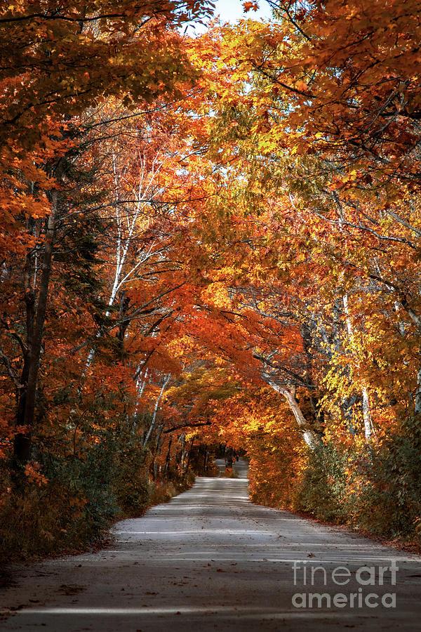 Door County Golden Path by Ever-Curious Geek