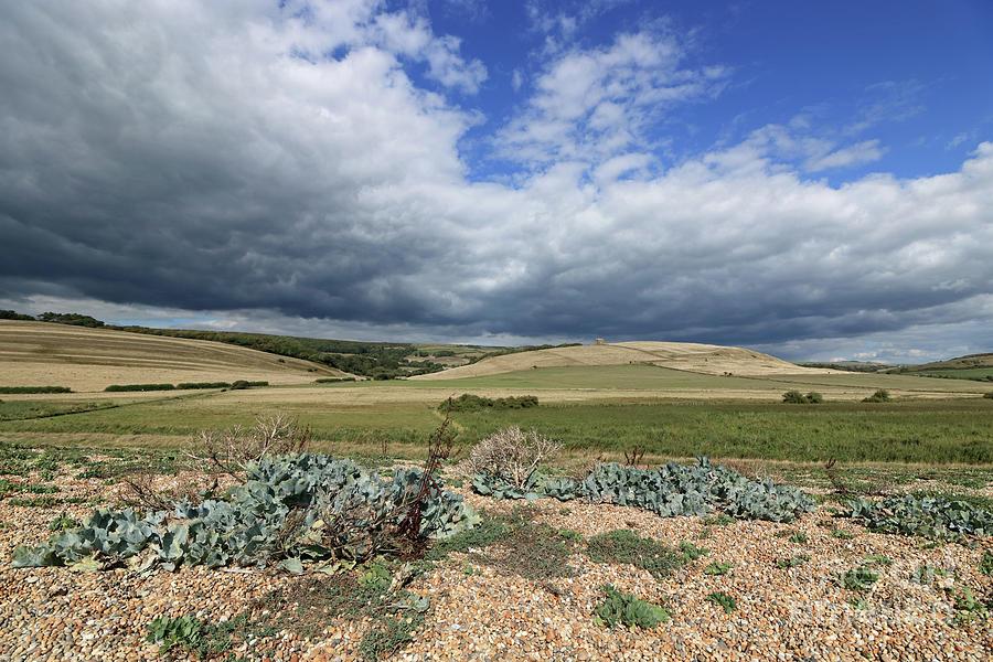 Dorset Landscape by Julia Gavin