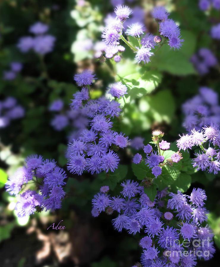 Community Gardens Photograph - Dorset Street Vermont Community Gardens Violet Blooms Vertical by Felipe Adan Lerma