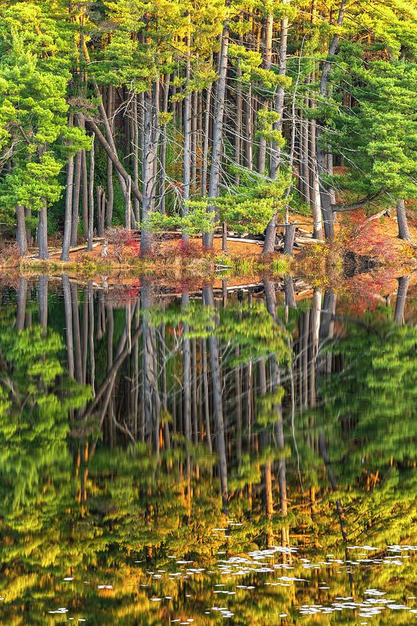 Double Pine Pleasure by Angelo Marcialis