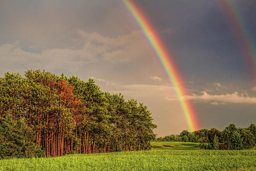 Double Rainbow Over The Pines by Dale Kauzlaric