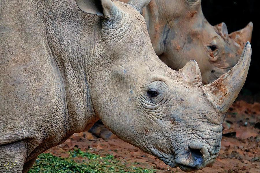 Rhino Photograph - Double Rhino by Rick Lawler